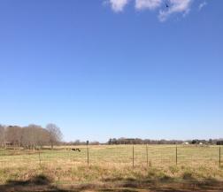 rolling-farmland-on-adcock-rd